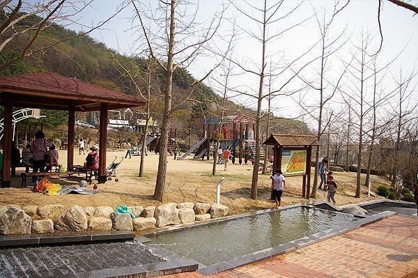 팔공산 벚꽃축제