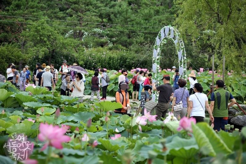 부여서동연꽃축제 사진