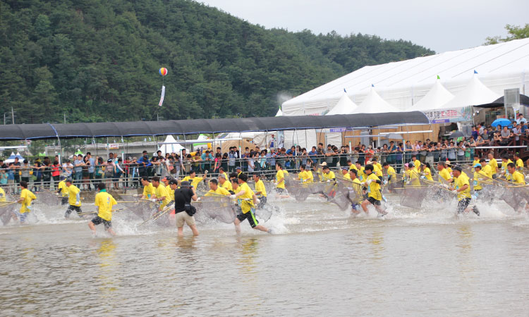 봉화은어축제 사진