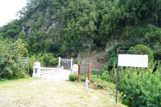 大邱道洞側柏樹林