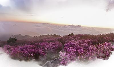 비슬산 참꽃 문화제