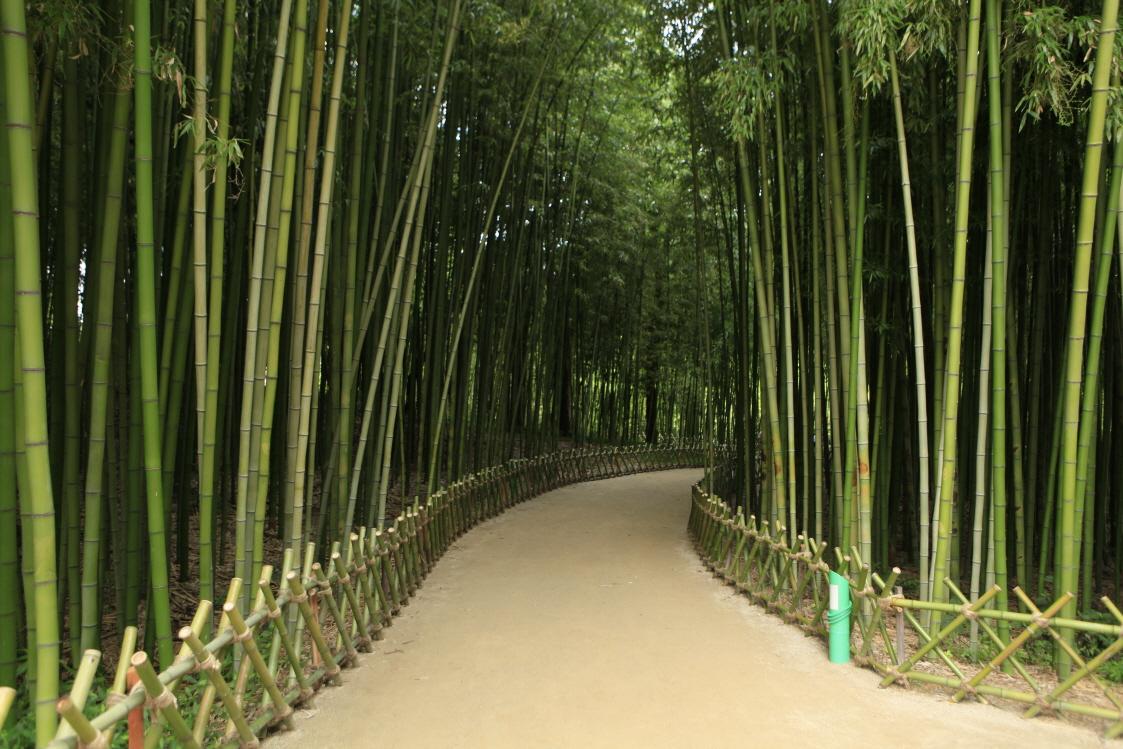 태화강 십리대숲1